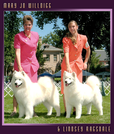 Colorado Samoyed breeder